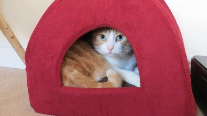 Milo in his cat bed