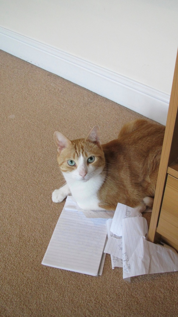 Milo sitting on a notebook