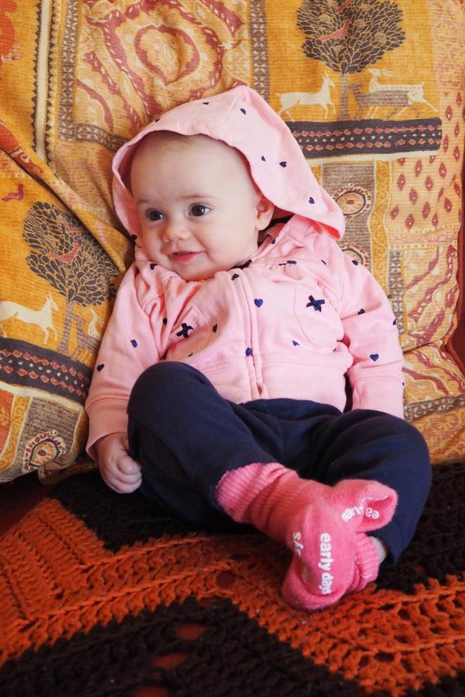 Popple in a hoodie