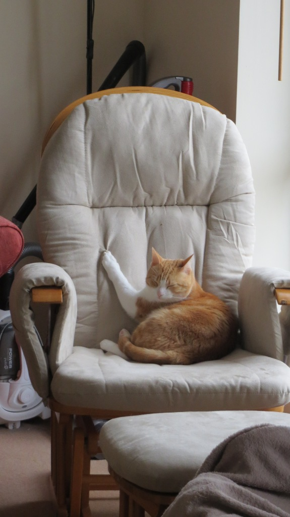 Milo on the rocking chair